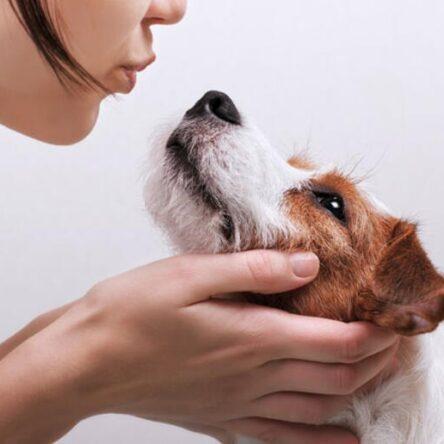 Köpeğiniz için pratik bilgiler – Köpek besleyenler için özel