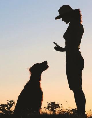 Köpek Psikolojisinde Eğitim