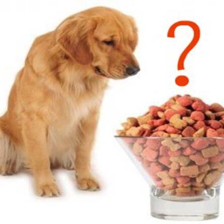 Köpeğin Temel Besin Gerensinimleri ve Fonksiyonları