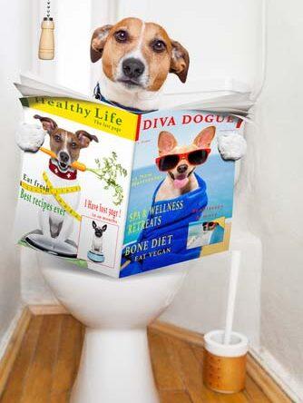 Köpeklerde Tuvalet Eğitimi Nasıl Yapılır?