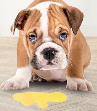 Köpeklerde Kusma, Kusma Nedenleri ve Kusma Diyeti Nasıl Yapılır?