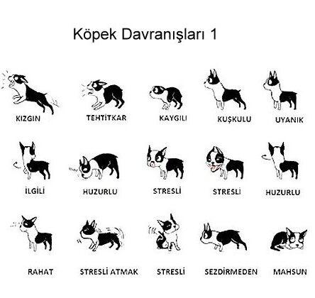 Köpeğinizin Vücut Dilini Biliyormusunuz ?
