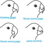 Evcil Kuşlarda Gaga Kesimi Nasıl Yapılır?