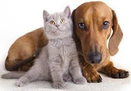 Kediler Ne Zaman Kısırlaştırılmalı, Zamanı Var Mı?