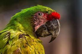 Kuşlarda Pacheco Hastalığı
